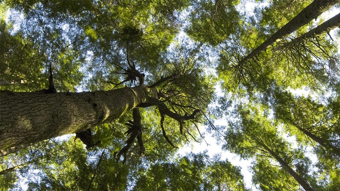 lifegate-energy-alberi-risparmia-pianeta